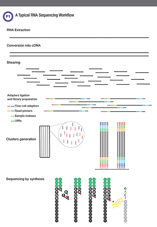 RNA Sequencing Workflow